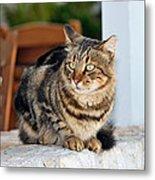 Cat In Hydra Island Metal Print
