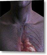 The Cardiovascular System Metal Print