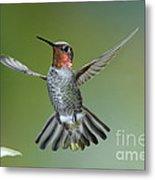 Annas Hummingbird Metal Print