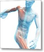 Male Musculature Metal Print