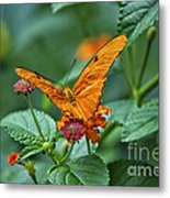 3 2 1 Prepare For Butterfly Liftoff Metal Print