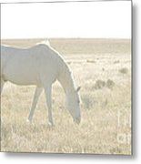 A White Mustang Feeds On Dry Grass Fields Of Arizona Metal Print