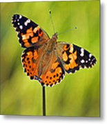 American Painted Lady Butterfly Metal Print
