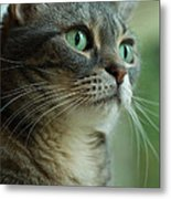 American Shorthair Cat Profile Metal Print