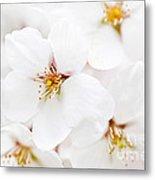Apple Blossoms Metal Print by Elena Elisseeva