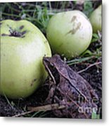 3 Apples And A Frog Metal Print