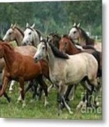 Arabian Horses Metal Print