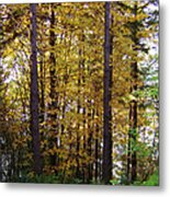 Autumn 5 Metal Print