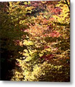 Autumn Colors And Road  Metal Print