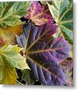 Autumn Maple Leaves Metal Print