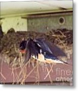 Barn Swallows Constructing Their Nest Metal Print by J McCombie