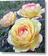 3 Beautiful Yellow Roses Metal Print
