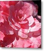 Begonia Named Nonstop Pink Metal Print