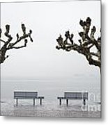Benches And Trees Metal Print