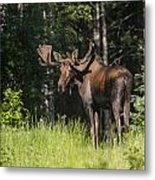 Big Fella Metal Print