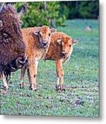 Bison Babies Metal Print