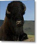 Bison  Bison Bison Metal Print