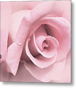 Blushing Pink Rose Flower Metal Print