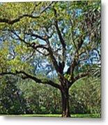 Bok Tower Gardens Oak Tree Metal Print