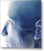 Bones Of The Face Metal Print