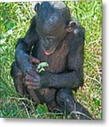 Bonobo Baby Metal Print