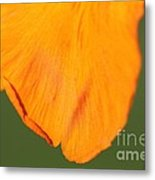 Canna Lily Named Wyoming Metal Print