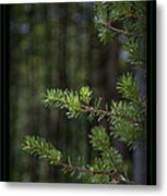Can't See The Forest Metal Print