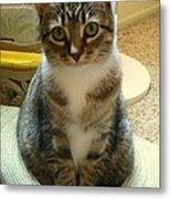 Cat In The Hat  Metal Print