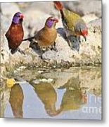 Colorful Birds From Africa Metal Print