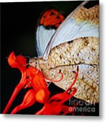 Colorful Portrait Of A Butterfly  Metal Print