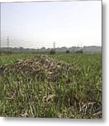 Cut And Dried Grass Along With Growing Grass Metal Print