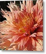 Dahlia Named Intrepid Metal Print