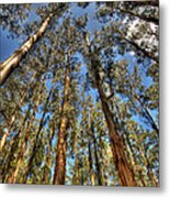 Dandenong Forest Metal Print