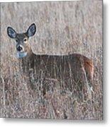 Deer In A Field Metal Print