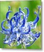 Devils Claw Flower Metal Print