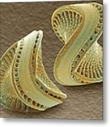 Diatoms, Sem Metal Print by Power And Syred