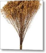 Dry Flowers Bunch Metal Print