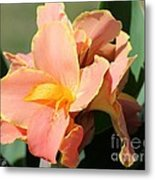 Dwarf Canna Lily Named Corsica Metal Print by J McCombie