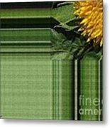Dwarf Sunflower Named Teddy Bear Metal Print