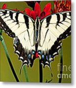 Eastern Tiger Swallowtail Butterfly Metal Print