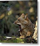 Environmental Woes Of Tierra Del Fuego Metal Print