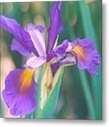 Exotic Iris Metal Print