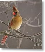 Female Northern Cardinal Metal Print