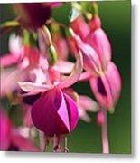 Fuchsia Named Lambada Metal Print