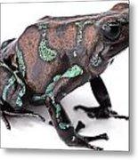 Golden Poison Dart Frog Metal Print