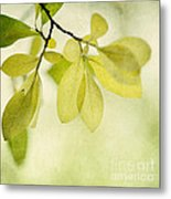 Green Foliage Series Metal Print
