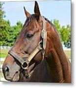 Horse On A Farm  Metal Print