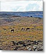 3 Horses At 4 Corners Metal Print