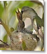 Hummingbird Babies Metal Print by Old Pueblo Photography