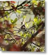 Hummingbird In Spring Metal Print